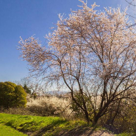 Vacanze primavera Umbria