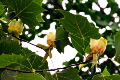 Bosco didattico fiori natura Umbria