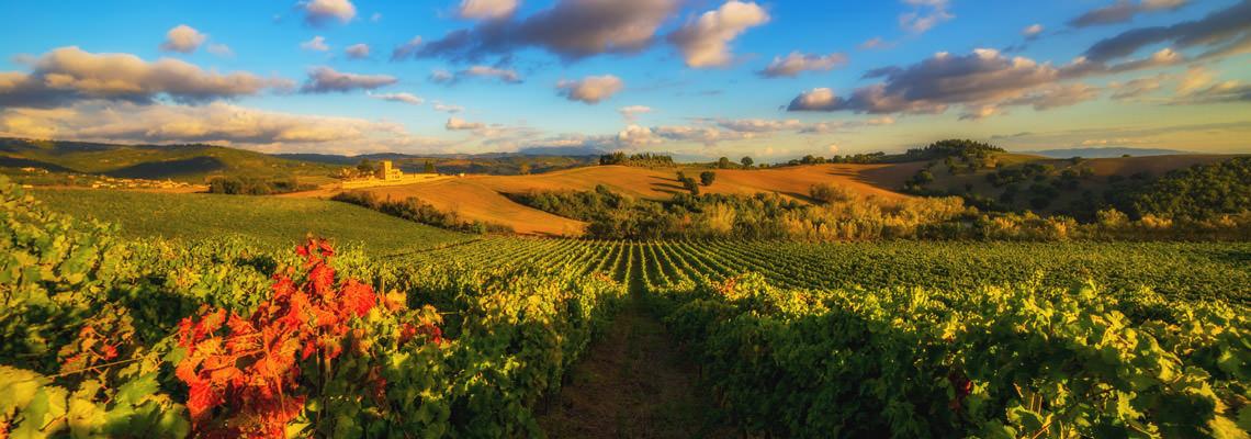 paesaggio vigne Perugia