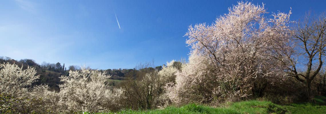 paesaggio primavera Perugia