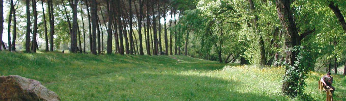 Pineta in Umbria - Emozioni e turismo in Umbria