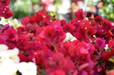 mostra mercato fiori e piante rare perugia