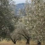 L'Olivo e la Ginestra: girare l'Umbria con uno sguardo alla salute | Perugia