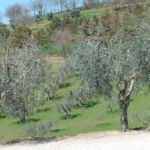 Agriturismo Il Melograno: tra cucina locale, agricoltura e relax   Perugia