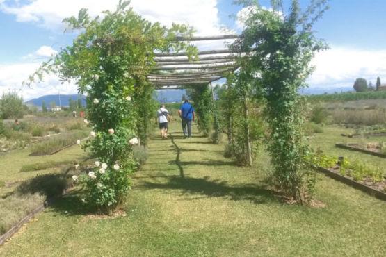 Giardino botanico lavandeto Assisi