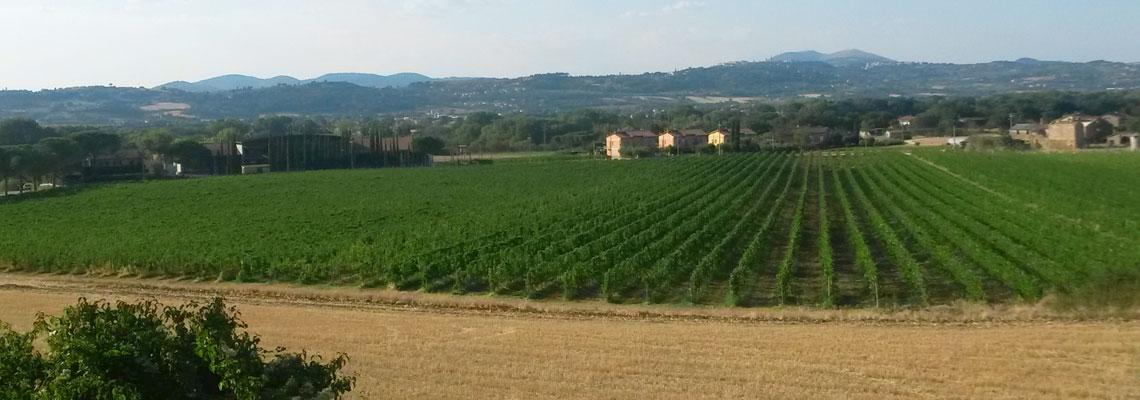 Vigne Lungarotti Torgiano Perugia