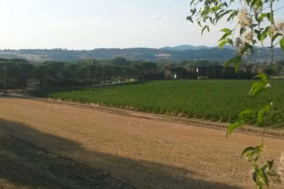 Vista panoramica delle vigne Lungarotti Torgiano