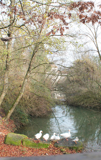Bosco didattico Ponte Felcino Perugia