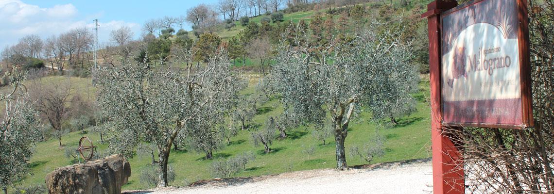 Veduta dall'Agriturismo Il Melograno Perugia